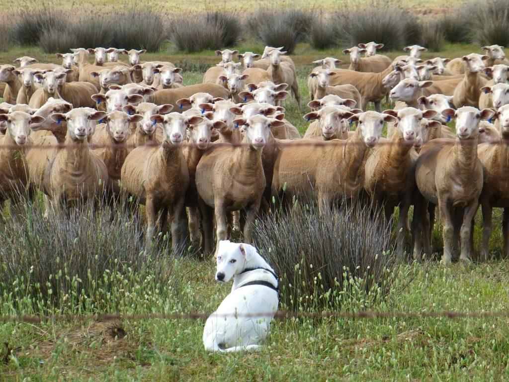 dog foto 1 1024x768 - Se repiten las dificultades... - networking coworking emprededores empresarios