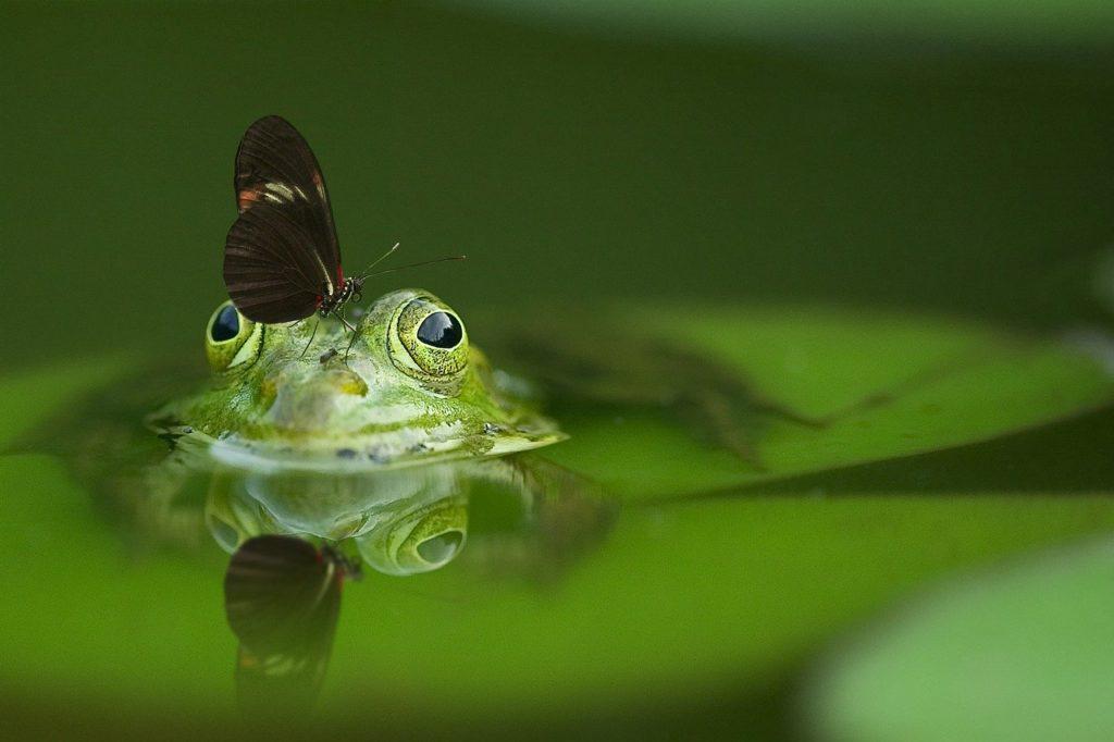 frog foto 4 1024x682 - En el largo plazo, todas las pymes son Unipersonales - networking coworking emprededores empresarios